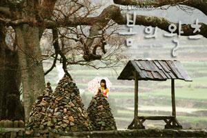 Phim Spring Waltz - Điệu valse mùa xuân 50756114