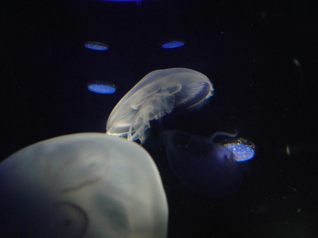 deux ou trois photos de l aquarium de la rochelle... Dsc00912