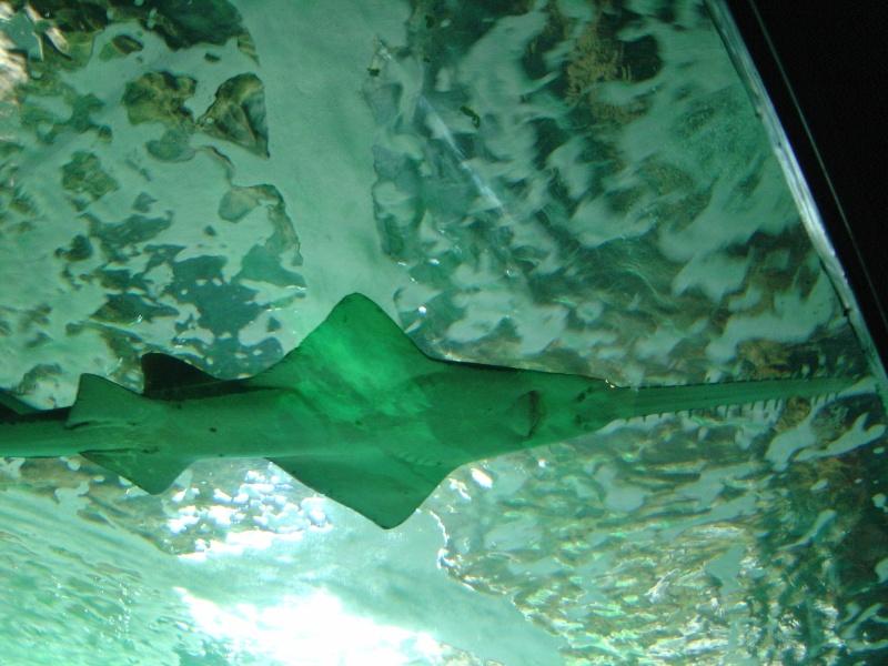 deux ou trois photos de l aquarium de la rochelle... Dsc01011