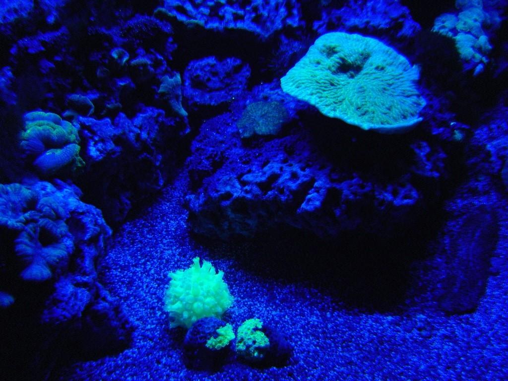 deux ou trois photos de l aquarium de la rochelle... Dsc01012