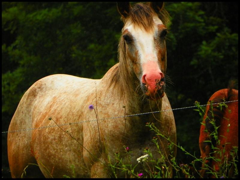 """NokotaSpirit"", l'élevage...Des nouvelles ! Amber11"