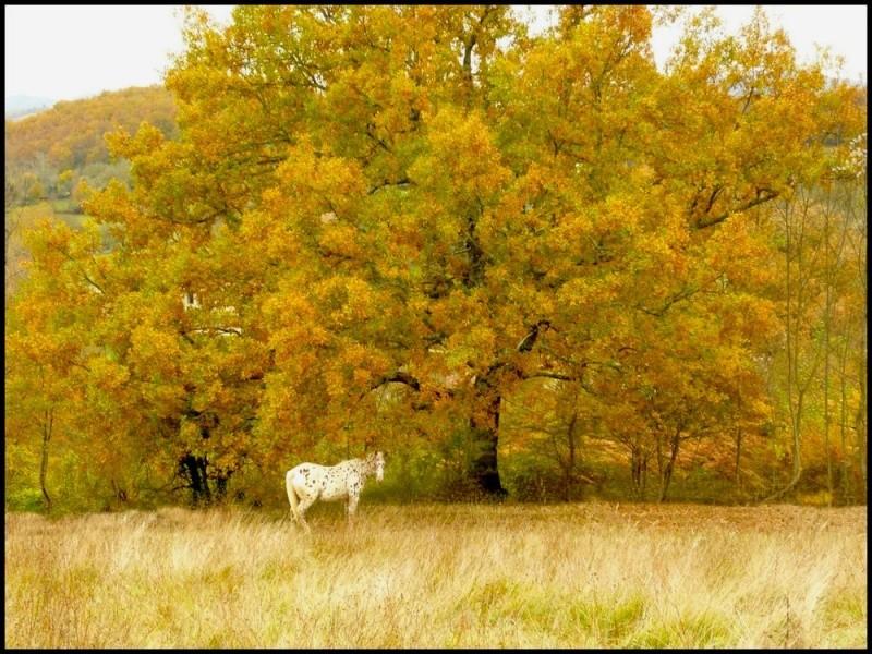 CONCOURS PHOTOS : L'automne Automn10