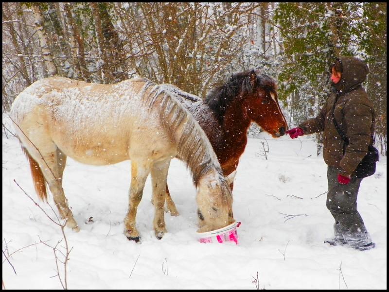 Nouveau concours photos ! La neige, vous, vos chevaux ! - Page 3 Eleveu10