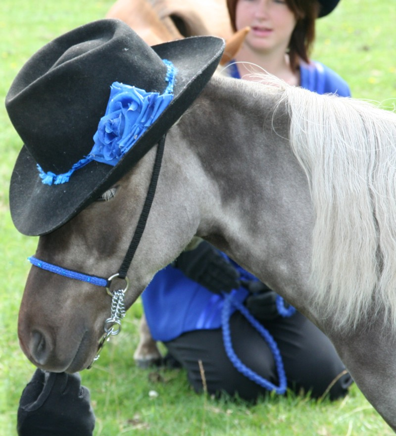 Post your favourite picture of your horse... Pippin11