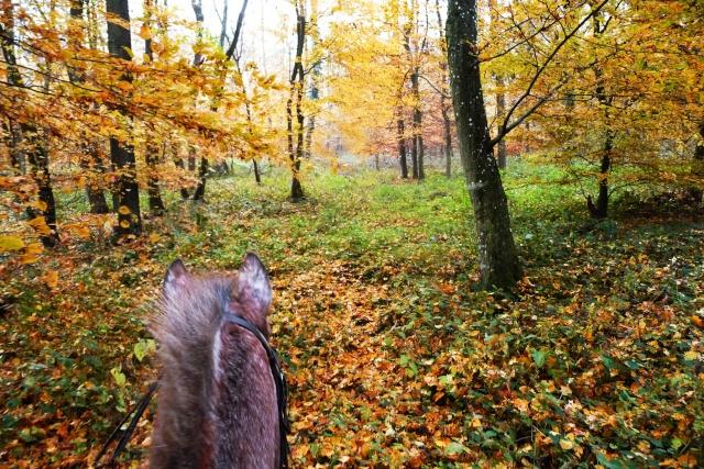 CONCOURS PHOTOS : L'automne P1070421