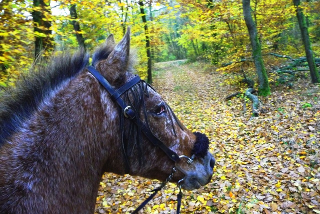 CONCOURS PHOTOS : L'automne P1070422