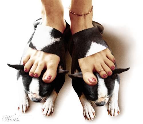 Idea ของสัตว์ต่าง ๆ 4148-110