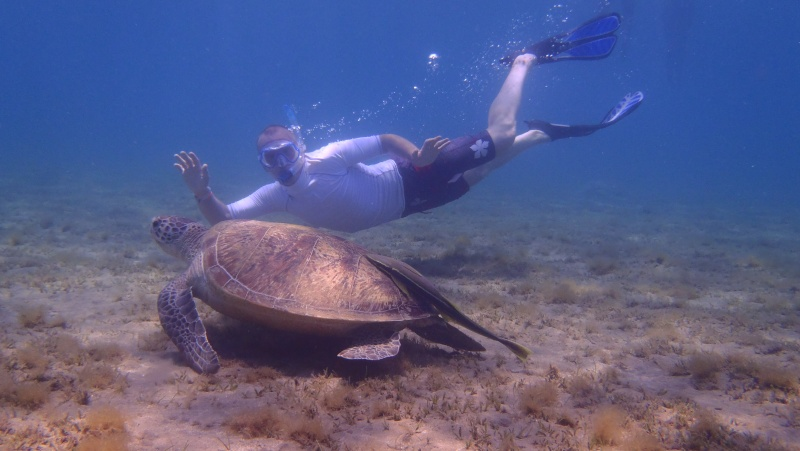 photos de plongée snorkeling en mer rouge( tortues, raies..) P7200210