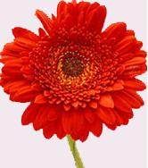 Categorie Photostocks Fleur_10