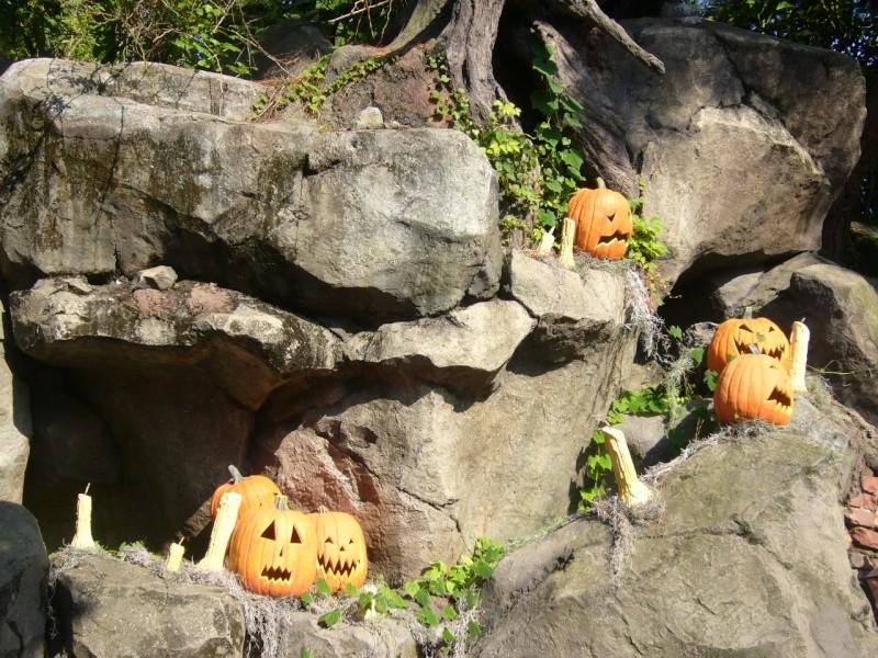 [Tokyo Disneyland] Halloween 2008 P1030413