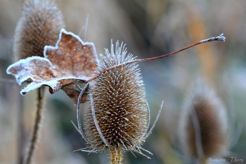 Séries hivernales - topic saisonnier de mes clichés Img_6010