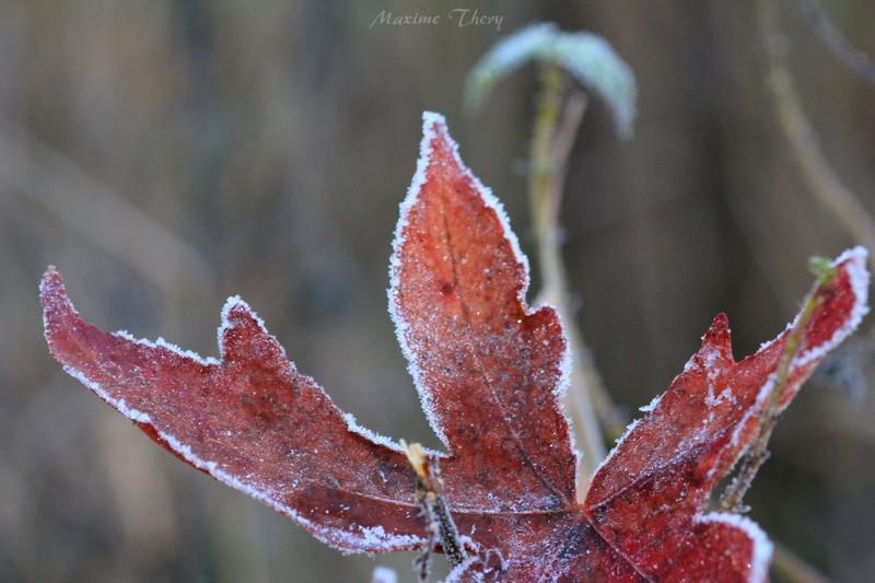 Séries hivernales - topic saisonnier de mes clichés Img_6011