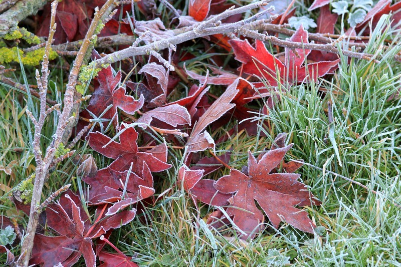 Séries hivernales - topic saisonnier de mes clichés Img_6013