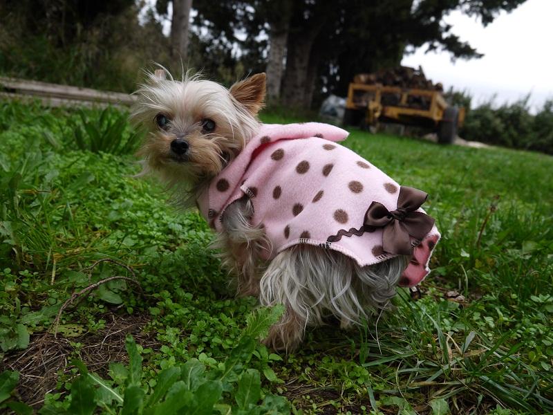 Et un petit manteau pour Nina P1050410