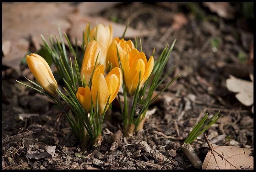 Photos du 08 mars 2012 Img_6912