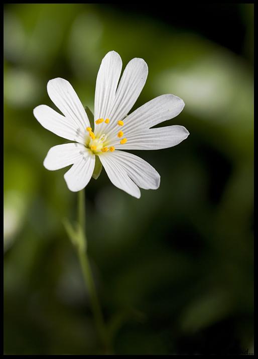 Photos du 1er mai 2012 Img_8311