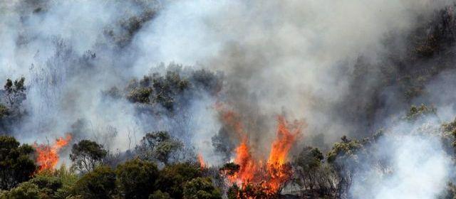 La Réunion en proie à un gigantesque incendie 16934910