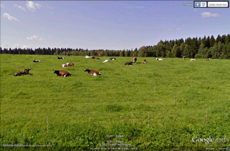 [Finlande] - STREET VIEW : les cartes postales - Page 3 Vaches10