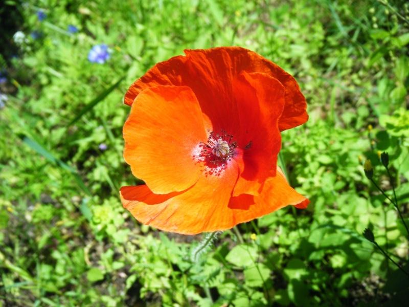 Favorisons les jachères florales ! Jachar11