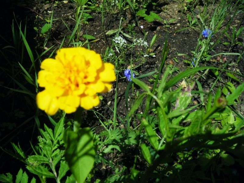 Favorisons les jachères florales ! Jachar12