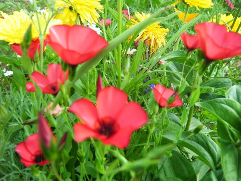 Favorisons les jachères florales ! Jachar15