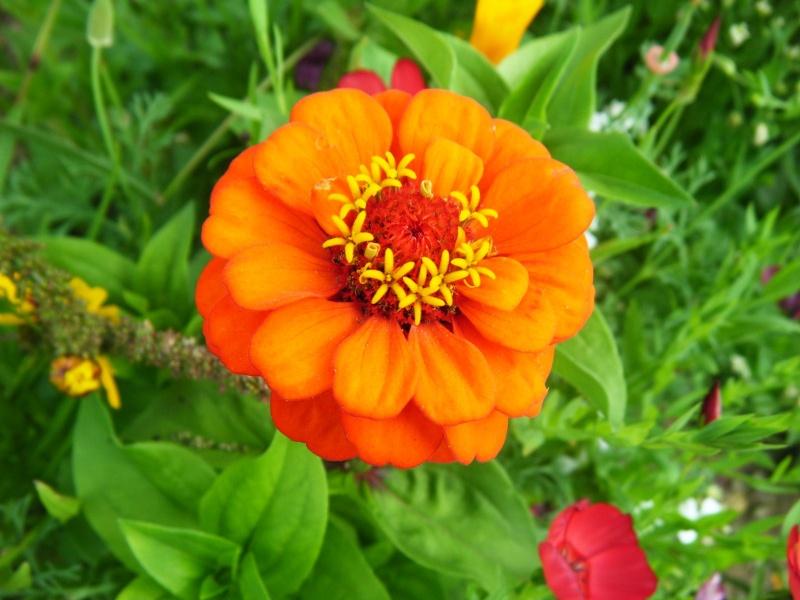 Favorisons les jachères florales ! Jachar16