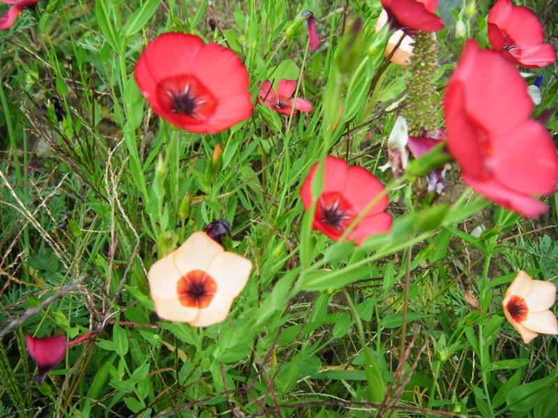 Favorisons les jachères florales ! Jachar18