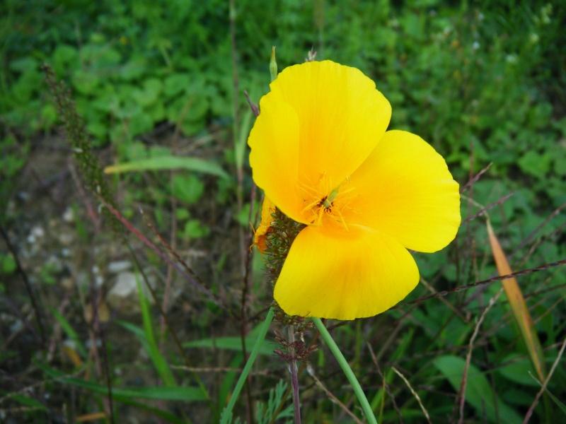 Favorisons les jachères florales ! Jachar19