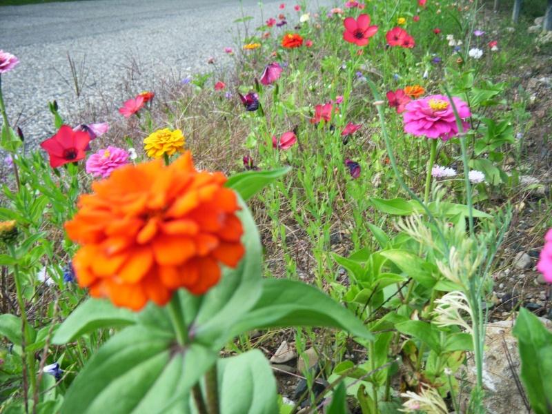 Favorisons les jachères florales ! Jachar20
