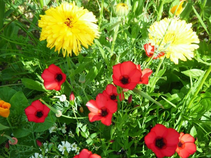Favorisons les jachères florales ! Jachar21