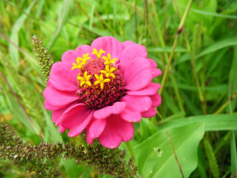 Favorisons les jachères florales ! Jachar22