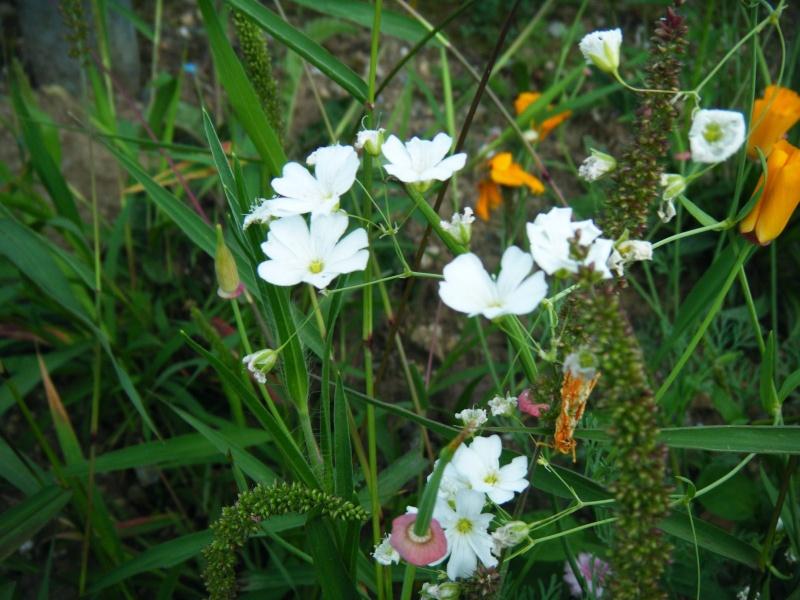 Favorisons les jachères florales ! Jachar23