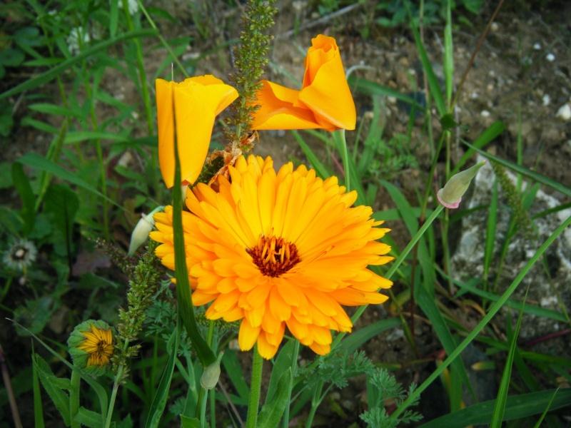 Favorisons les jachères florales ! Jachar24