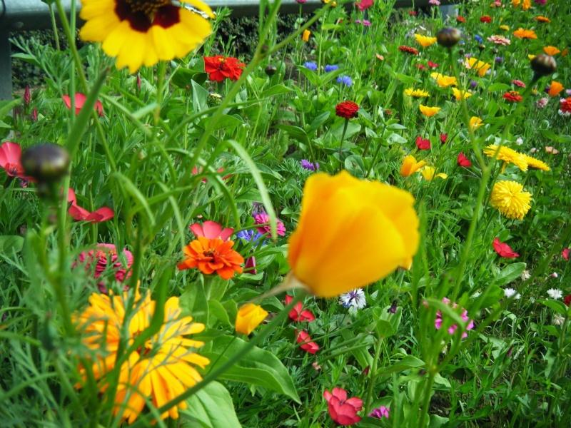 Favorisons les jachères florales ! Jachar25