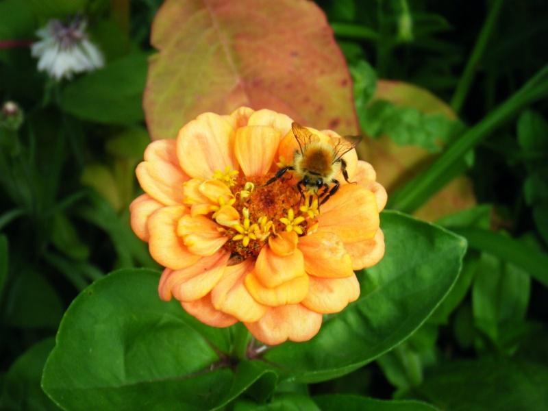 Favorisons les jachères florales ! Jachar26