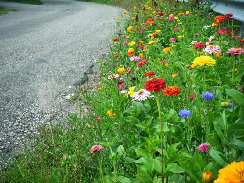 Favorisons les jachères florales ! Jachar31