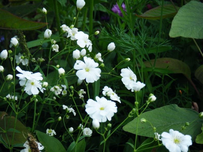 Favorisons les jachères florales ! Jachar32