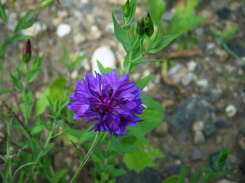 Favorisons les jachères florales ! Jachar33