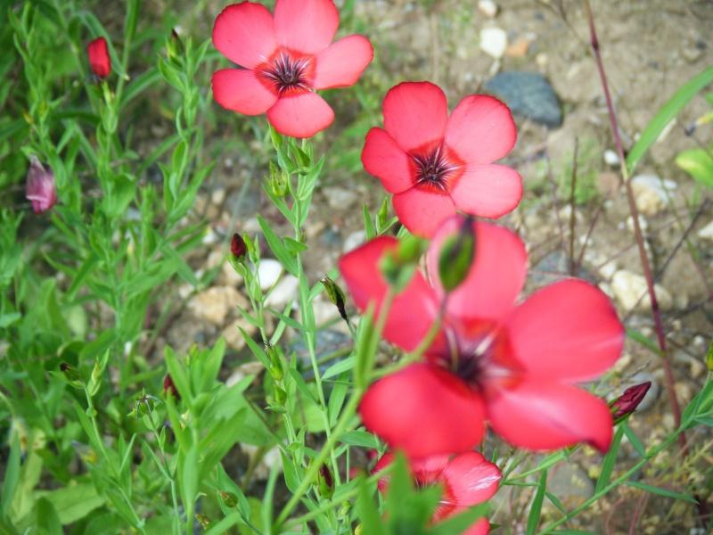 Favorisons les jachères florales ! Jachar35