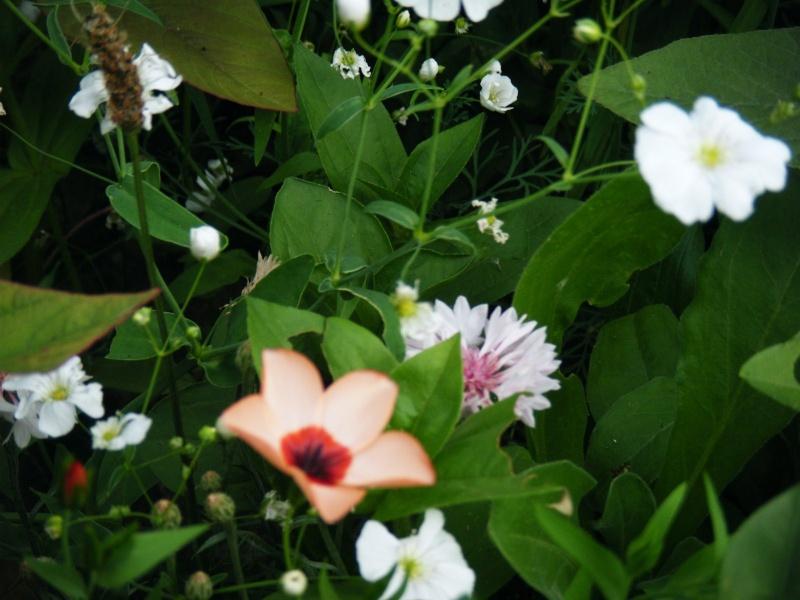 Favorisons les jachères florales ! Jachar36