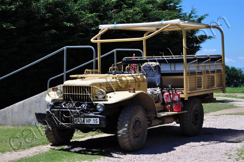 Safari à Ruynes en Margeride Dsc_4814