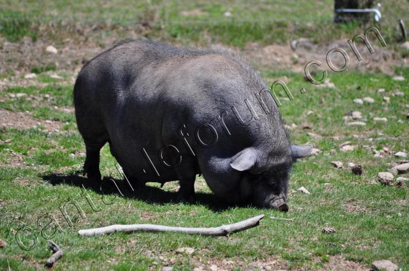 Safari à Ruynes en Margeride Dsc_4815