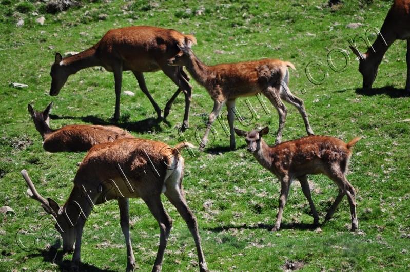 Safari à Ruynes en Margeride Dsc_4924