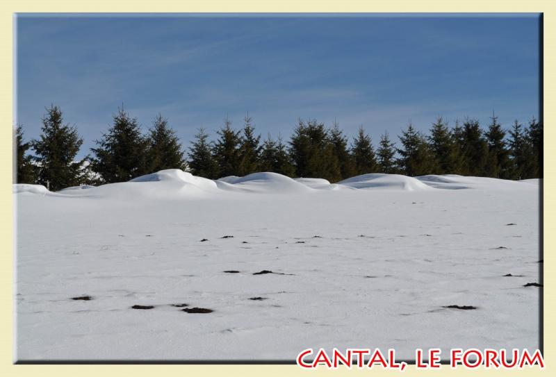 Photos du Cézallier en Février 2012 Dsc_8611