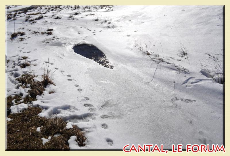 Photos du Cézallier en Février 2012 Dsc_8710