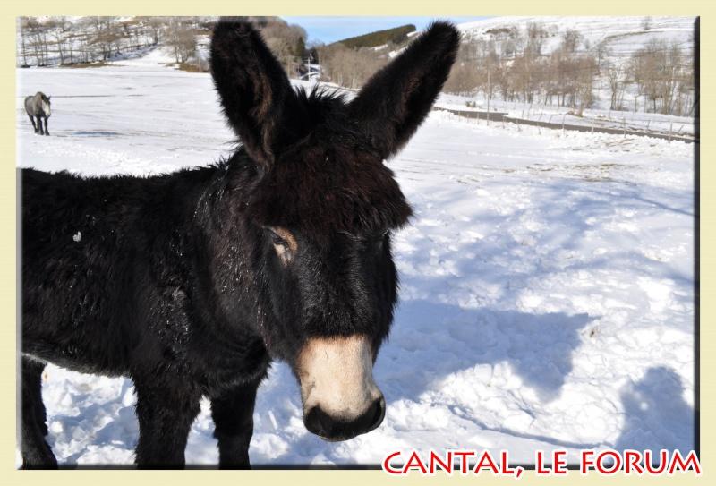 Photos du Cézallier en Février 2012 Dsc_8712
