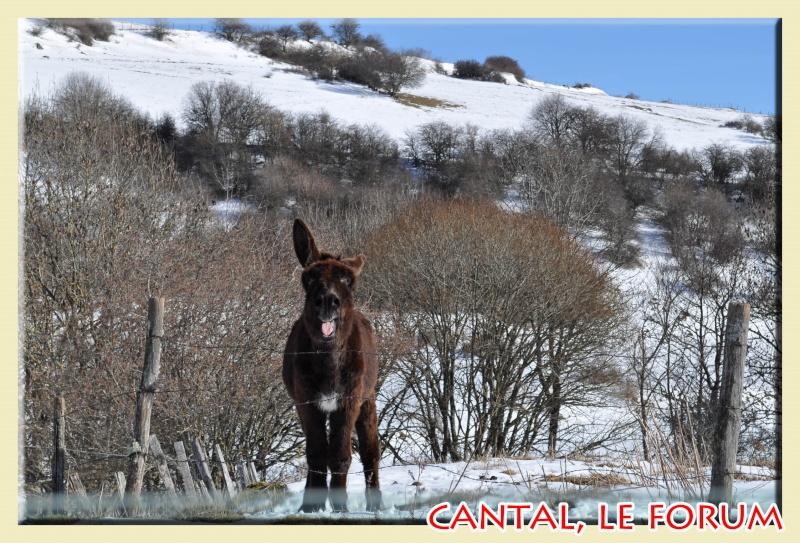 Photos du Cézallier en Février 2012 Dsc_8714