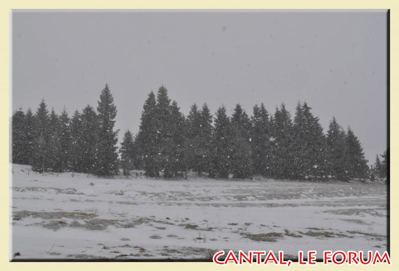 Photos du Cézallier en Février 2012 Dsc_8810
