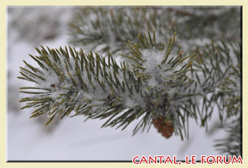 Photos du Cézallier en Février 2012 Dsc_8811