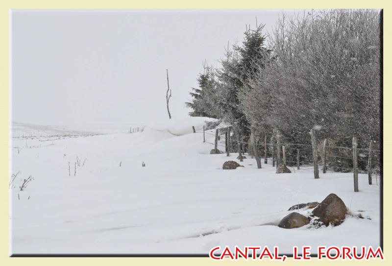 Photos du Cézallier en Février 2012 Dsc_8910